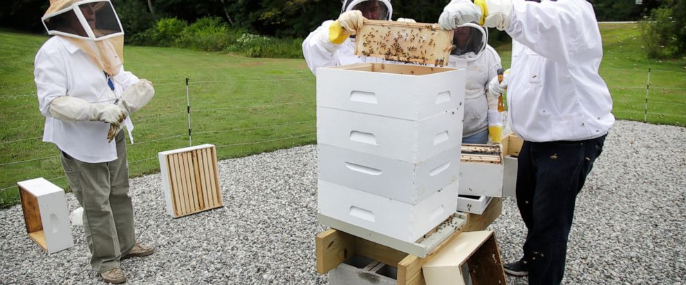 In this Aug. 7, 2019 photo, instructor Karen Eaton, left, supervises beekeeping activities performed by veterans at the Veterans Affairs beehives in Manchester, N.H. New Hampshires only veterans medical center is hoping its beekeeping program will