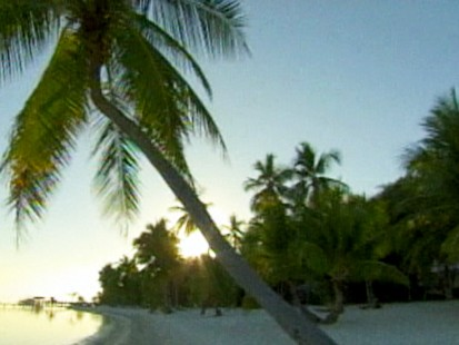 VIDEO: Health Nuts for Coconuts