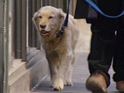 VIDEO: Cancer treatment for dogs
