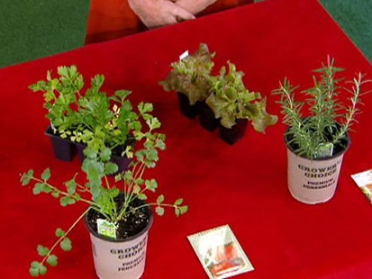VIDEO: Learn to Tend Your Own Garden