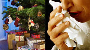 PHOTO Tis the season to be -- sniffly? Although many people assume that winter hails the end of high pollen counts and pesky seasonal allergies, the holiday season has a slew of allergy woes all its own.