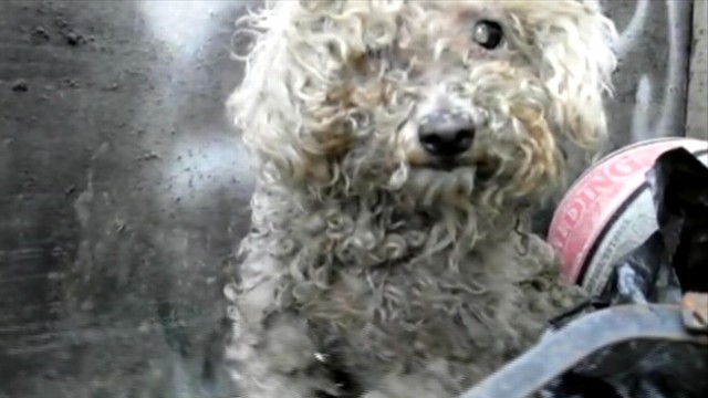 """VIDEO: Rescue group """"Hope for Paws"""" raises money to restore Fionas vision."""