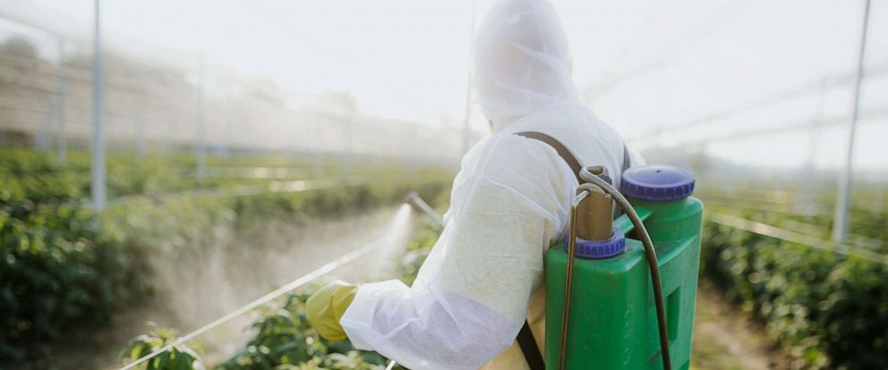 PHOTO: In this stock photo an agricultural worker appears to takes care of his estate.