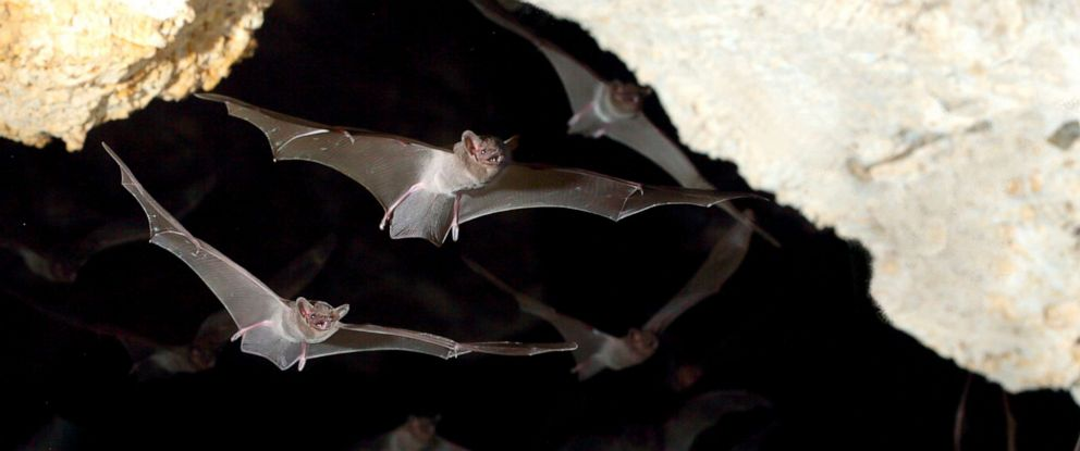 PHOTO: Bats fly in a cave in this stock photo.