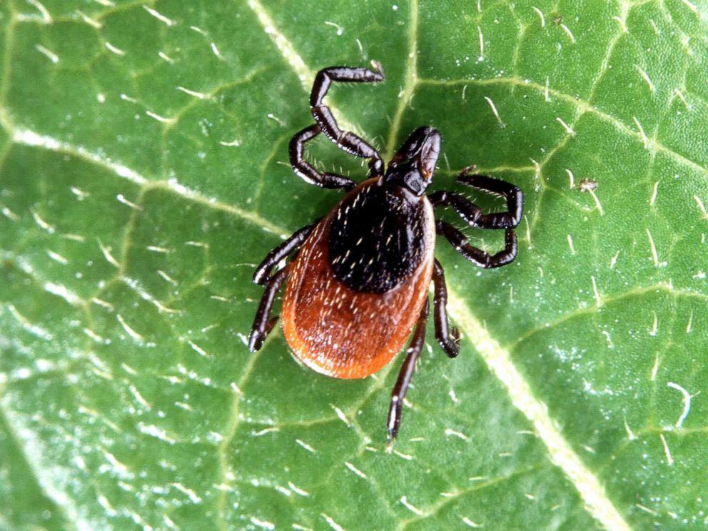 Hudson Valley Resident Dies From Powassan Virus