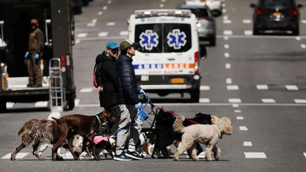 dog walker nyc mo hpMain 20200402 185904 16x9 992