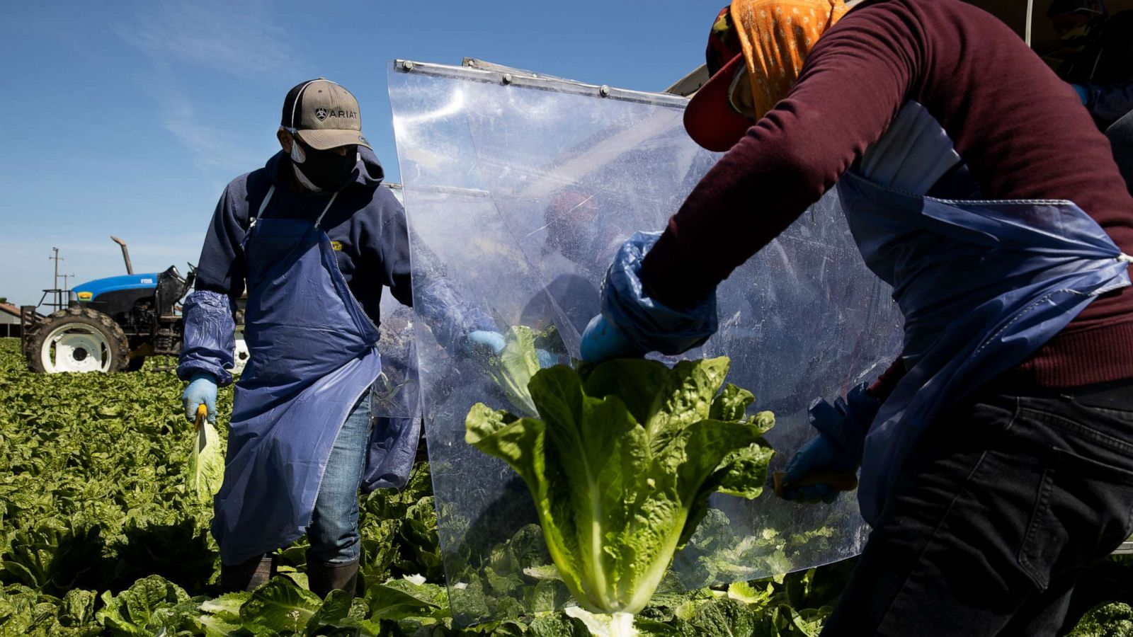 Essential Farmworkers Risk Covid 19 Exposure To Maintain Food Supply Abc News