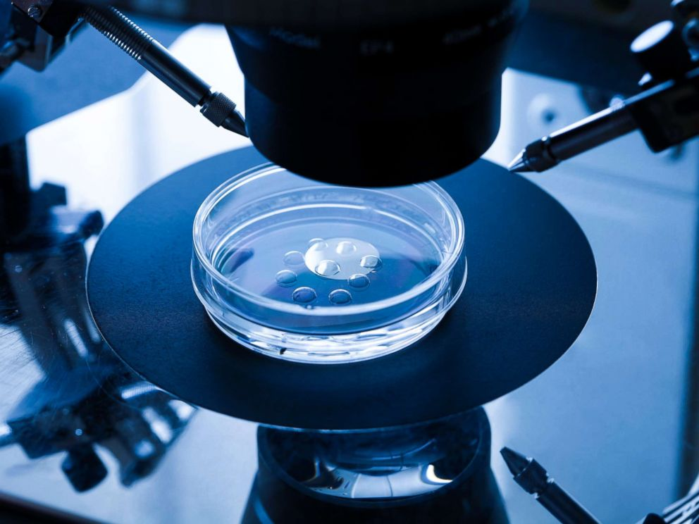 PHOTO: Embryo culture dish used for in vitro fertilization (IVF) is seen here.