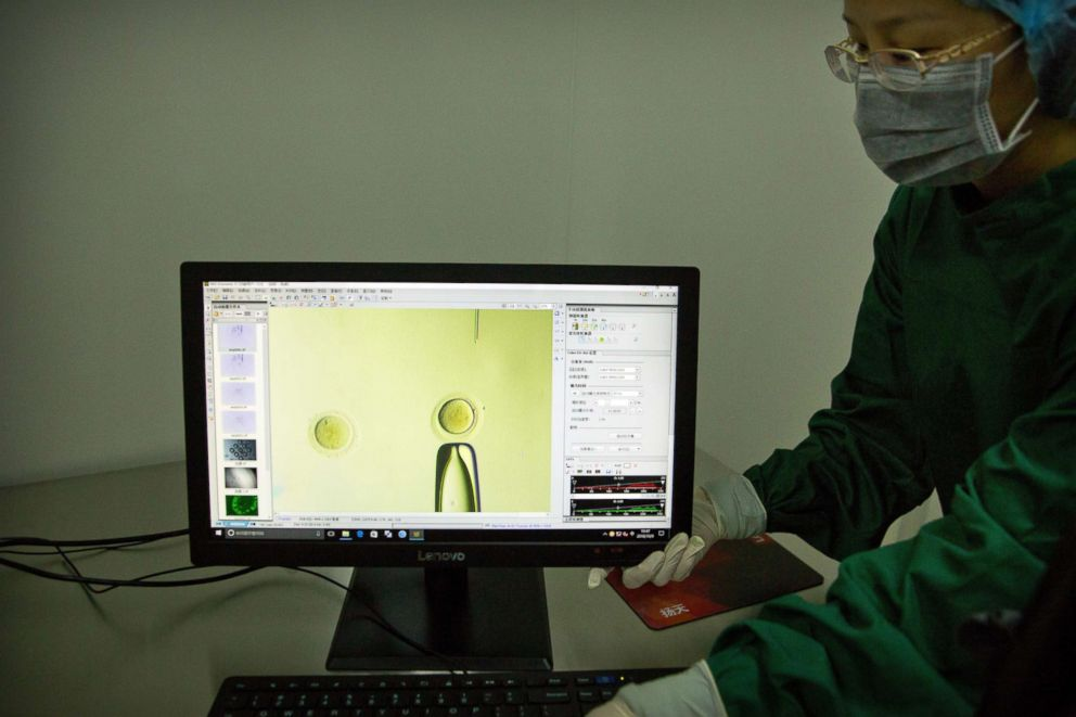 In this Oct. 9, 2018 photo, Zhou Xiaoqin adjusts a monitor showing a video feed of Qin Jinzhou moving a fine glass pipette containing Cas9 protein and PCSK9 sgRNA to an embryo under a microscope at a laboratory in Shenzhen in southern China's Guangdong province.