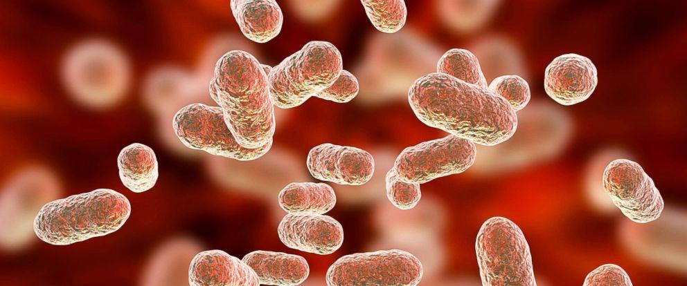 PHOTO: Close-up of bacterium