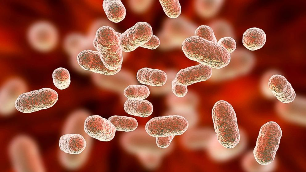 How the bacteria in your gut affect your mind and body