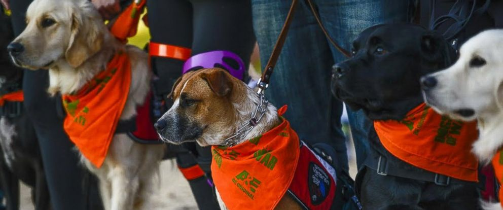 PHOTO: Paws and Stripes is a non-profit organization that matches rescue dogs with war veterans.