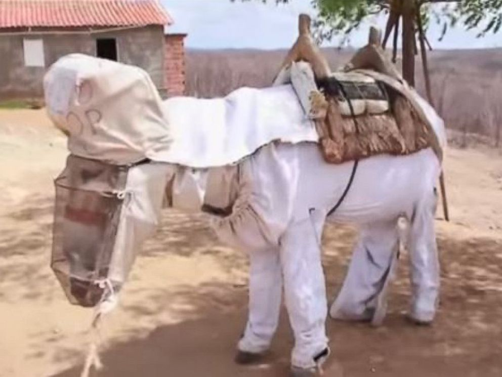 PHOTO: Boneco is thought to be the world's only beekeeping donkey.