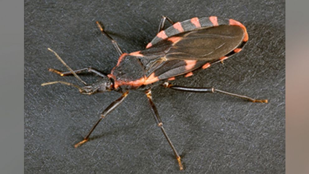 Sensational When Small Bugs Cause Big Problems This Insects Bite Can Caraccident5 Cool Chair Designs And Ideas Caraccident5Info