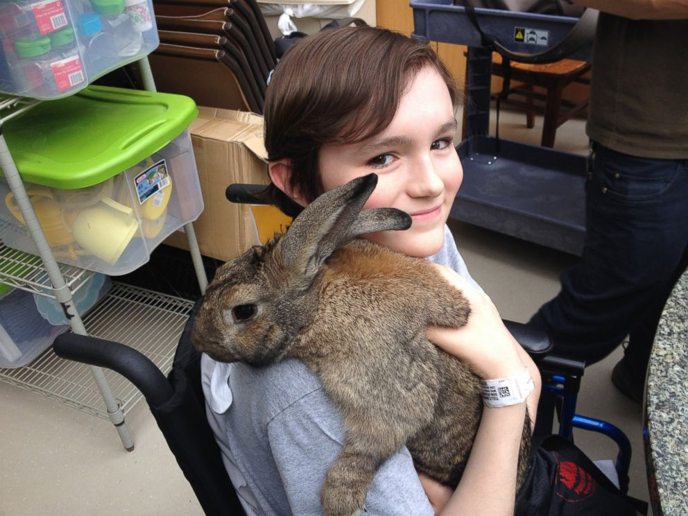 PHOTO: A 13-year-old NYU Langone patient, identified only as Dan, visited with Clovis the bunny.