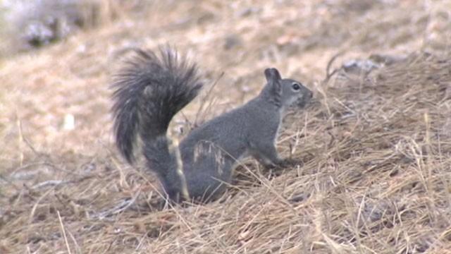 Plague-Infected Squirrel Closes California Campground