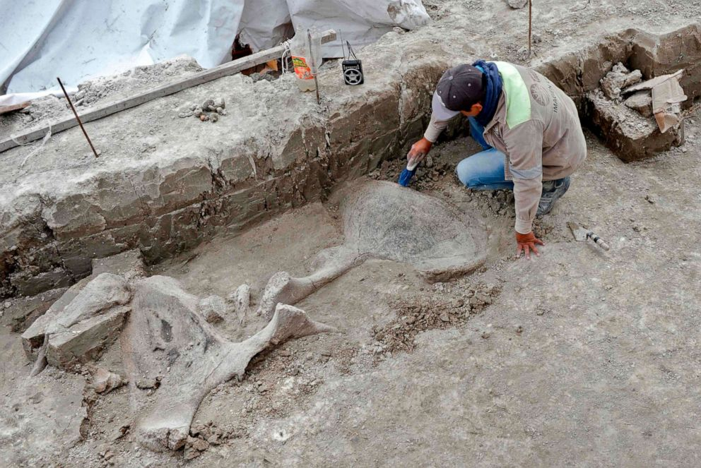 PHOTO: An expert works on mammoth bones found in what is believed to be the first mammoth trap set by humans, in Tultepec, Mexico, in a photo released by Mexicos National Institute of Anthropology (INAH).