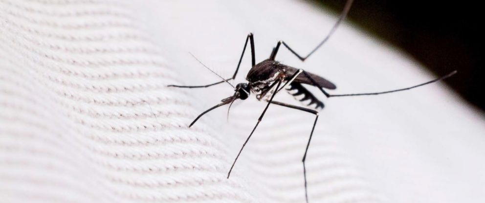 PHOTO: A mosquito is seen close-up in this undated stock photo.