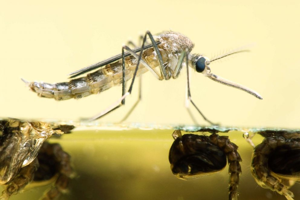 Mosquito pool tests positive for West Nile Virus