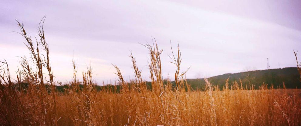 PHOTO: Wheat field in Oklahoma