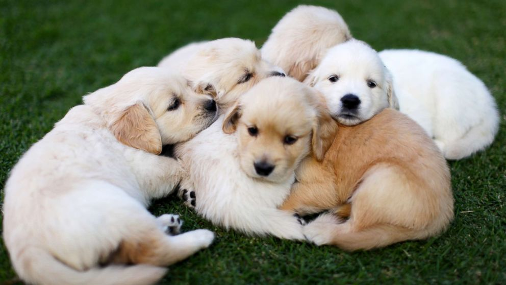 Puppies spread the Campylobacter outbreak across 18 states ...