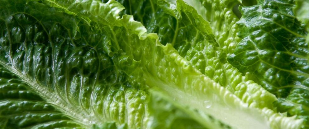 PHOTO: An undated stock photo of leaves of Romaine lettuce.