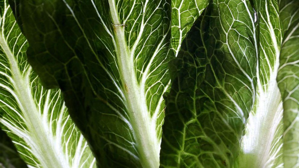 Mehr als 97.000 Pfund Salat erinnerte über E. coli ängste inmitten der multi-state-Ausbruch