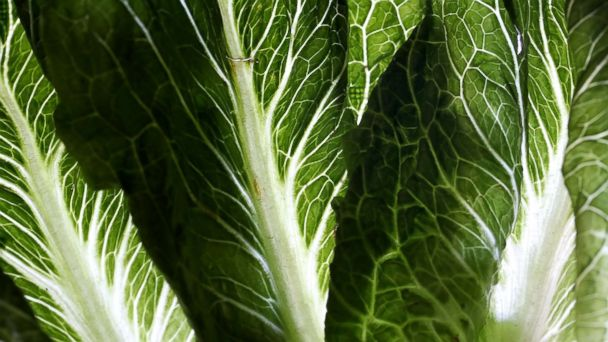 Romaine lettuce from California linked to E. coli outbreak that has infected 67 people in 19 states: CDC