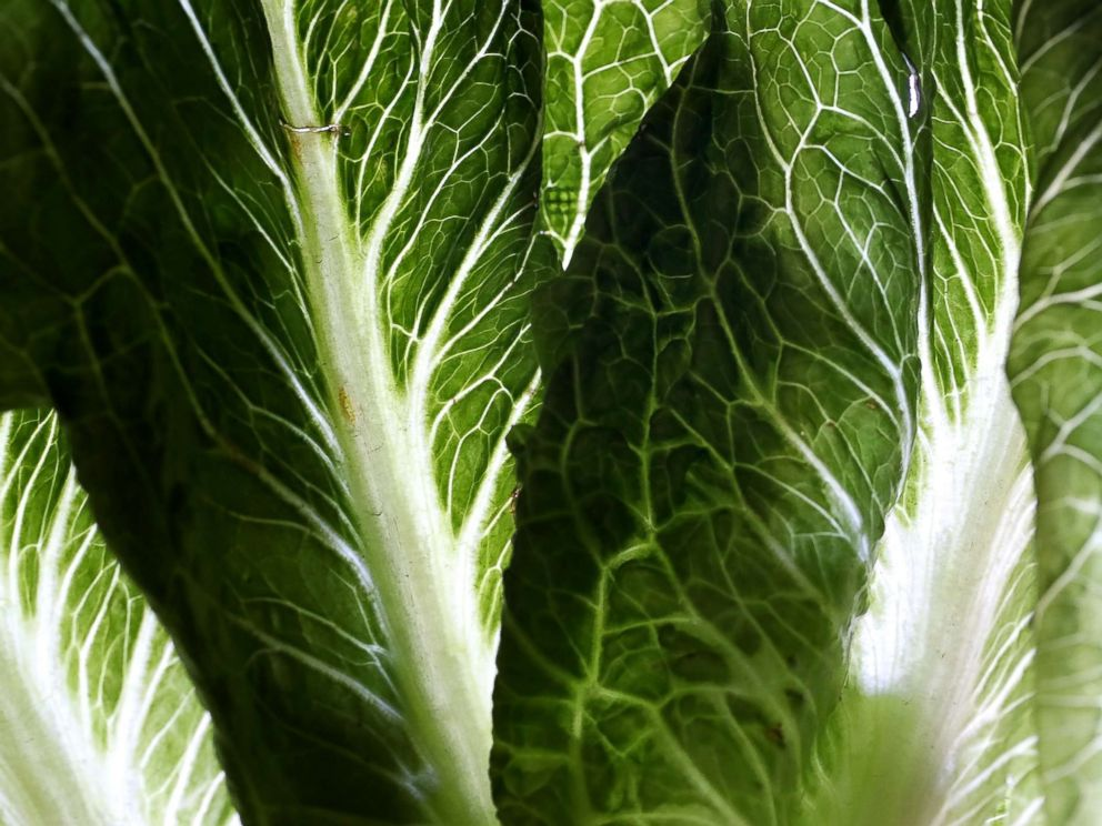 PHOTO: Romaine lettuce is displayed on May 2, 2018 in San Anselmo, Calif.