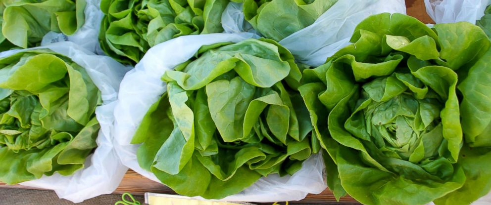 PHOTO: Romaine lettuce for sale.