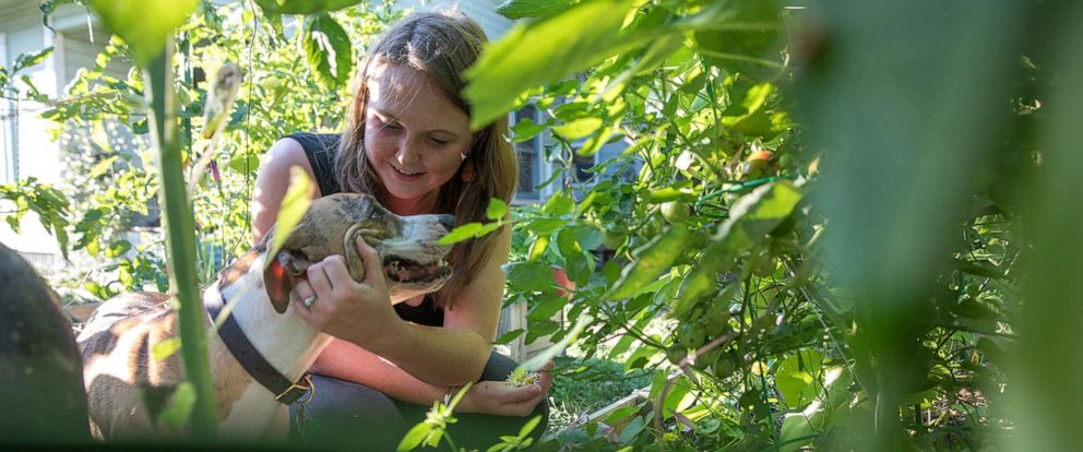 PHOTO: Since her spinal surgery, Liv Cannon has been able to work in the garden and play with her energetic dogs without the prospect of hours or days of pain.