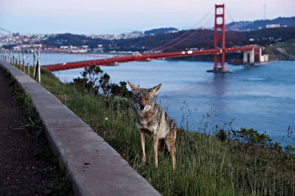Happy Earth Day photos: Wildlife roams as the planet's human ...