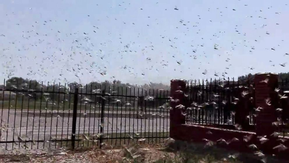 Locust Plague Threatens Crops in Southern Russia Video ...