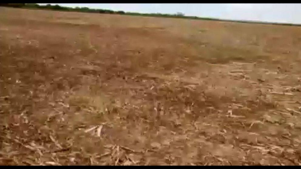 VIDEO: Locusts Swarm Farms in Argentina