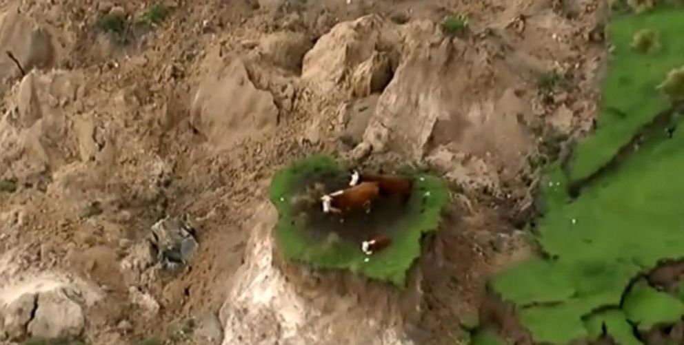 μακελειο νεα ζηλανδια News: 7.8 Magnitude Quake In New Zealand Leaves Cows Stranded On