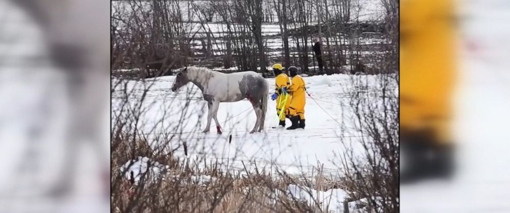Fire crews were able to save five horses from a frozen Canadian pond, but two horses died.