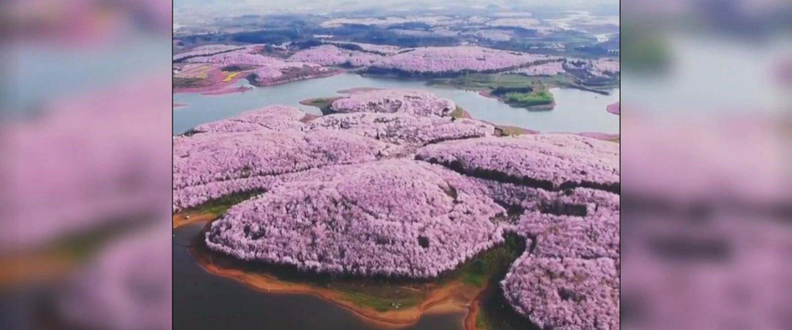 VIDEO: Spring turns China into sea of flowers