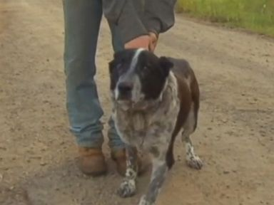 WATCH:  Partially blind and deaf dog rescues lost girl