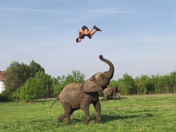 WATCH:  Animal trainer flips for this elephant