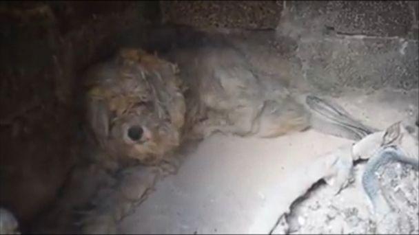 Dog found alive days after Greek wildfires