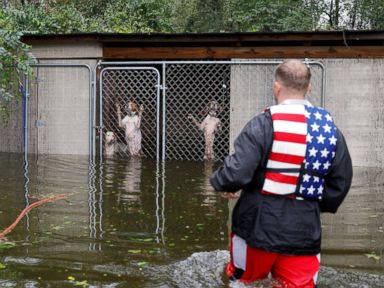 WATCH:  Dogs rescued from Hurricane Florence flooding, a message of hope: World in Photos