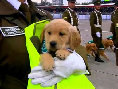 WATCH:  Puppies march in annual Chilean military parade