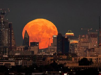 WATCH:  A harvest moon, a cheetah cub and clinching a playoff spot: World in Photos