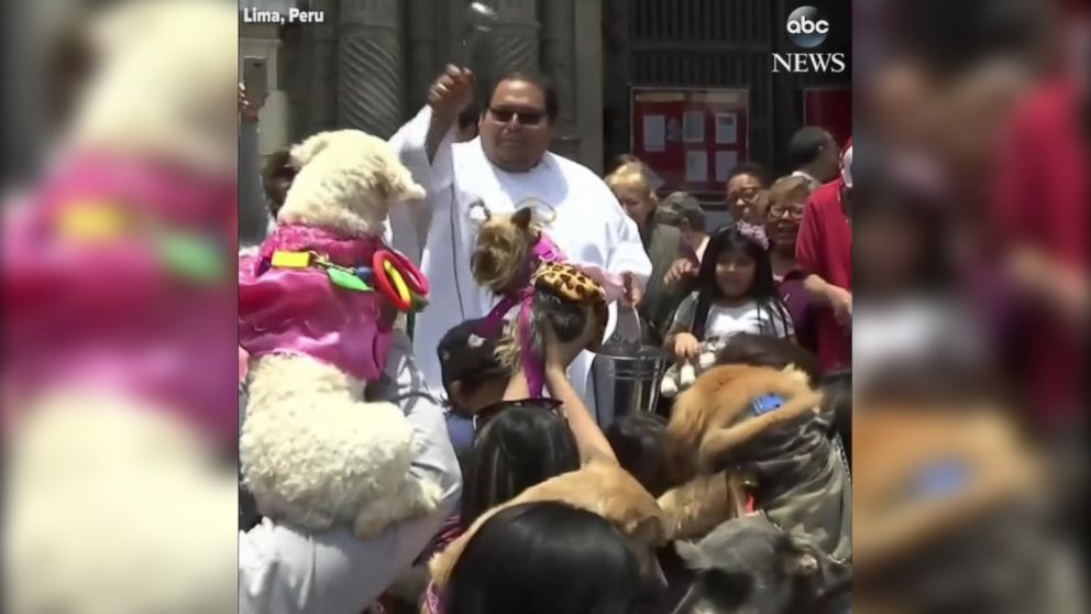 VIDEO: Peruvians bring their pets to church for blessing