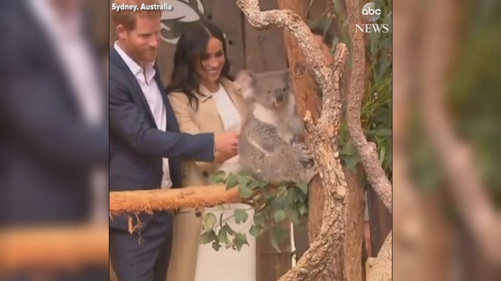 Harry and pregnant Meghan makes friends with a koala Video - ABC News