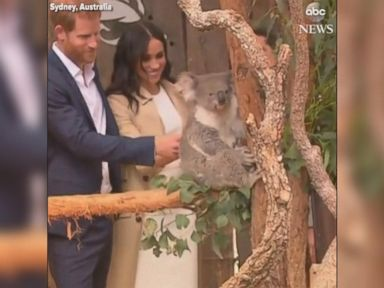 WATCH:  Harry and pregnant Meghan make friends with a koala