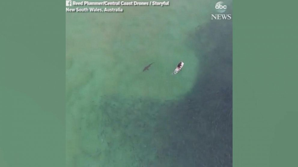 Drone footage shows shark lurking below paddle boarder