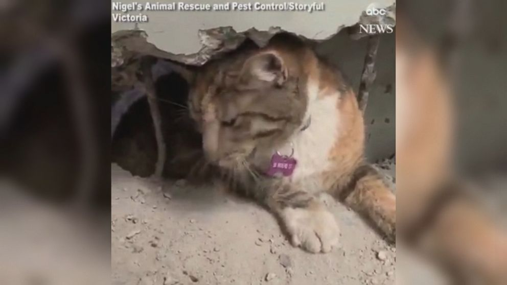 VIDEO: The cat was taken to a local veterinarian to recover after the incident.