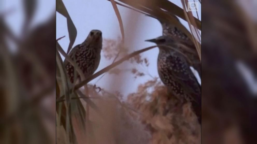 VIDEO: Migratory birds make shapes over southern Israel