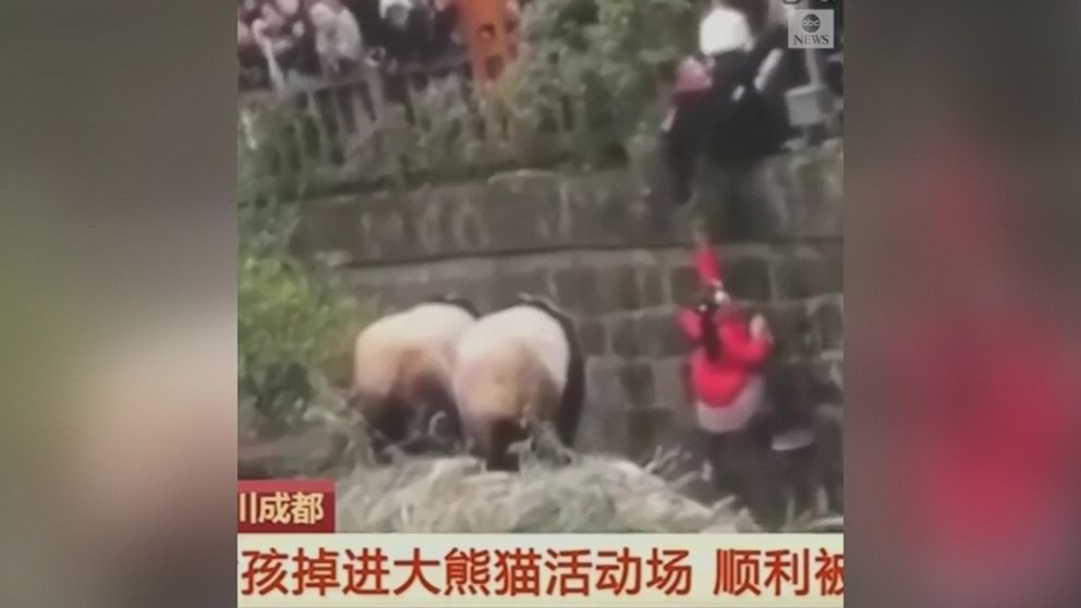 VIDEO: Security guards rescued a young girl who fell into the panda enclosure at a zoo in southwest China over the weekend.